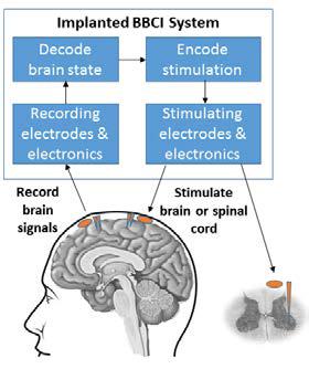 Brain interface graphic