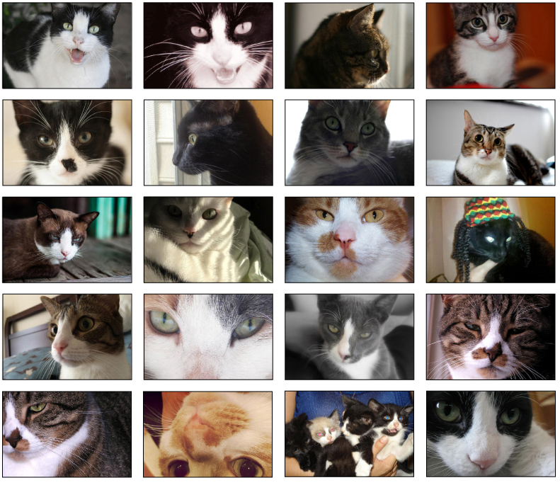 Collection of 20 close-up photos of cats in varying poses, arranged in a grid